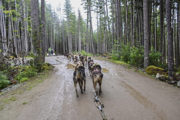 Musher's Camp & Dog Sled Experience