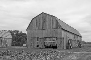 Tobacco Barn, St. Mary's County, Maryland